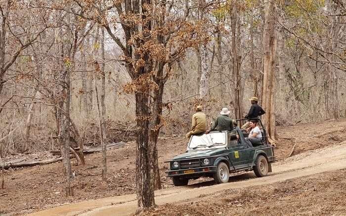 Travelers enjoying a safari ride in Pench National Park