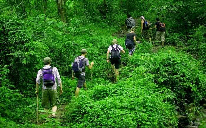 Travelers taking up jungle trek in Pench National Park