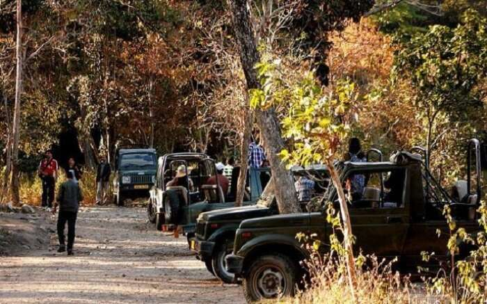 Travelers taking up tiger safari in Pench National Park