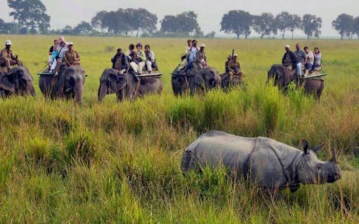 acj-1910-kaziranga-national-park-10