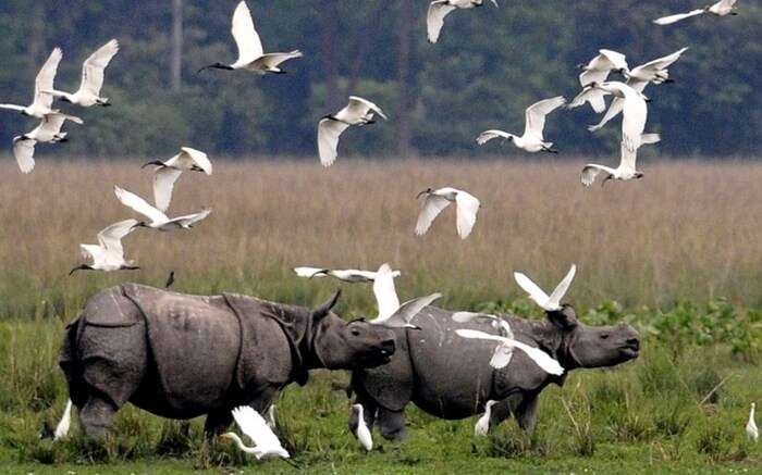 acj-1910-kaziranga-national-park-5