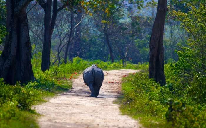 acj-1910-kaziranga-national-park-6