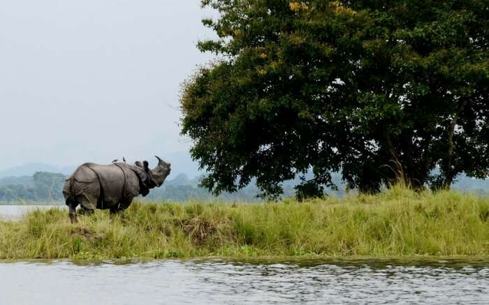 acj-1910-kaziranga-national-park