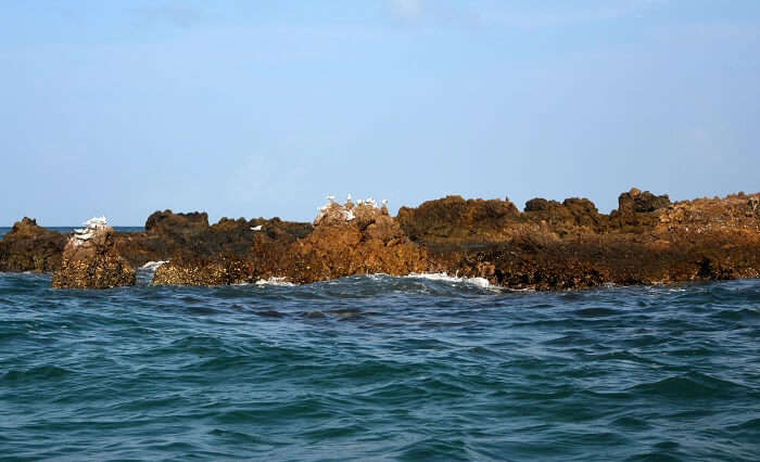 seagulls on snake island