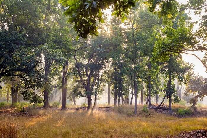 bandhavgarh national park india