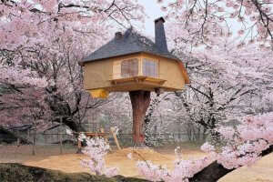 a treehouse during cherry blossom