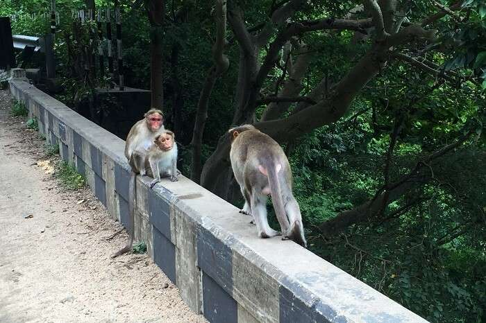Monkeys in Thekkady