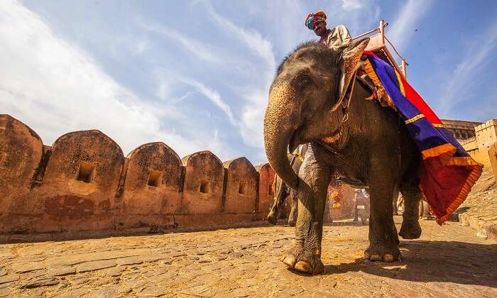 Elephant rides at Amer Fort Jaipur