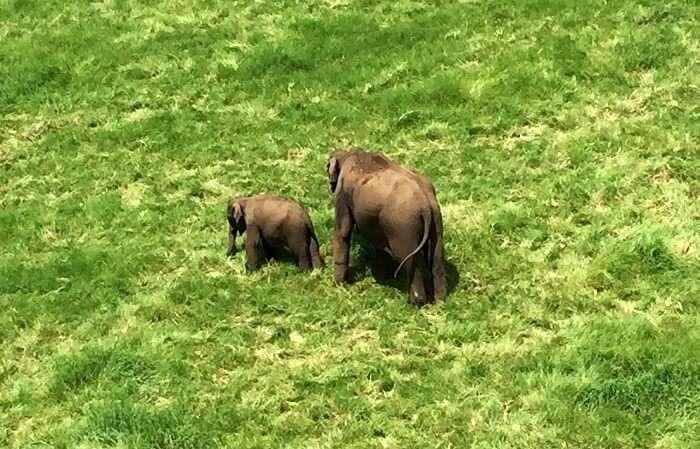 Elephants in Thekkady