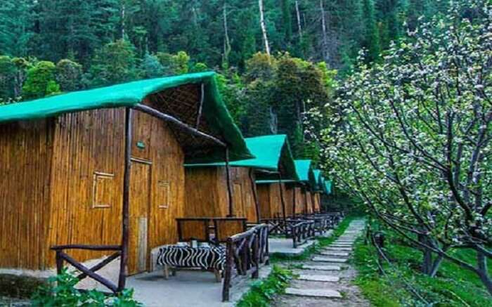 A view of tents of camp Mashobra Green in Shimla