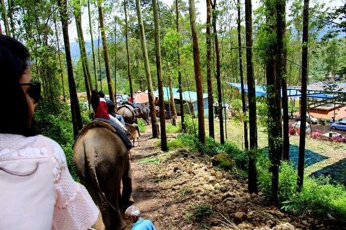 elephant ride