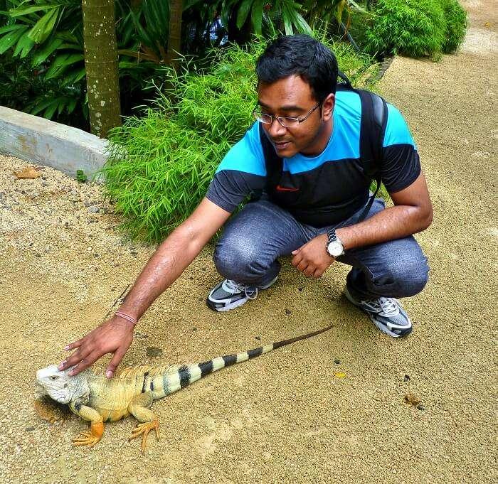 wildlife spotting in mauritius