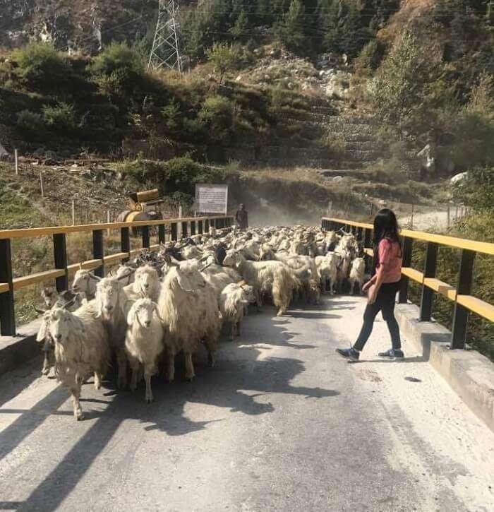 malana village route