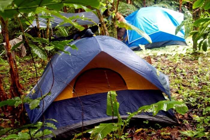 Feel The Thrill Of Jungle Camping