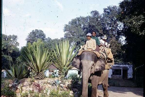 Flora And Fauna Of Dudhwa National Park