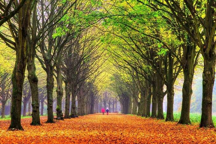 rejuvenate yourself in Amsterdam Forest
