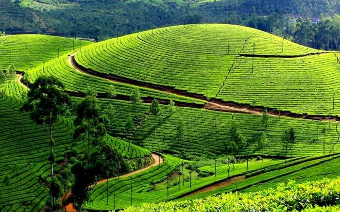 Vast landscapes and fascinating beauty of the Nilgiri Hills Ooty