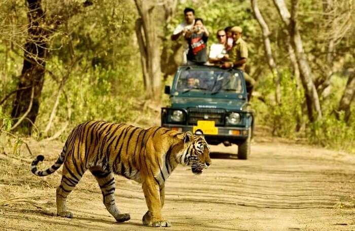 dandeli wildlife sanctuary