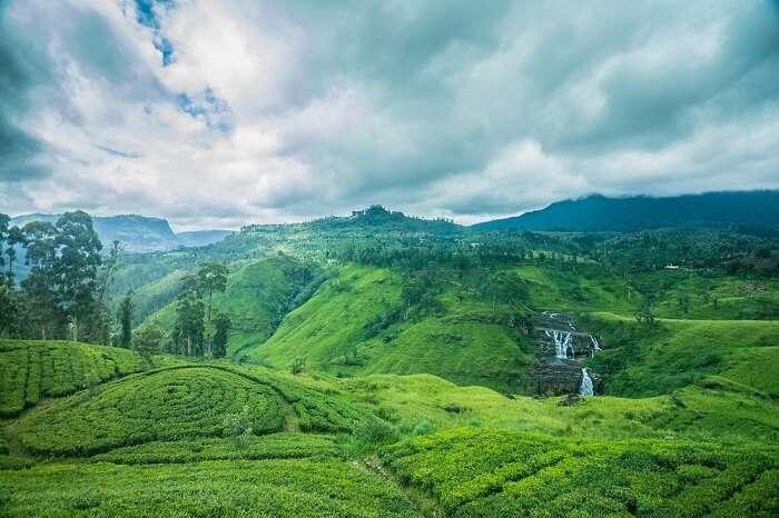 tea estates colombo