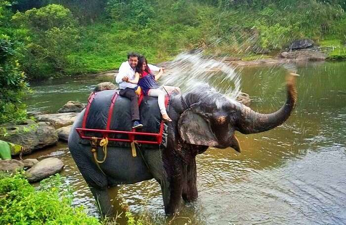 Elephant splashes water on a couple