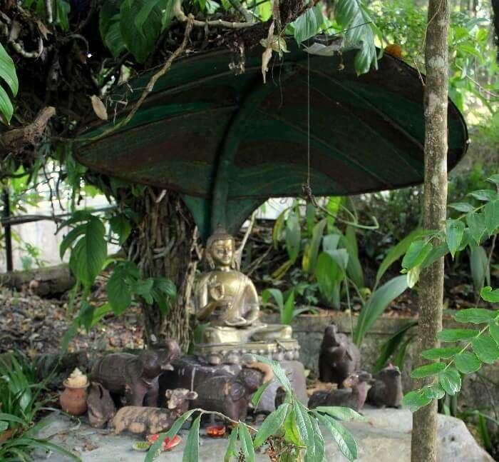 budha darjeeling zoo