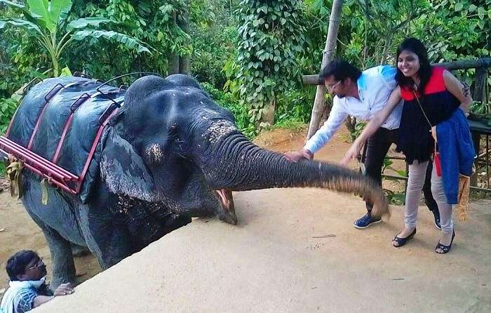 Couple interacting with an Elephant