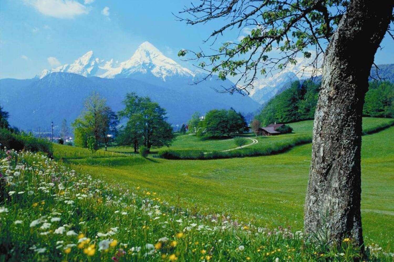 a beautiful garden in mountains