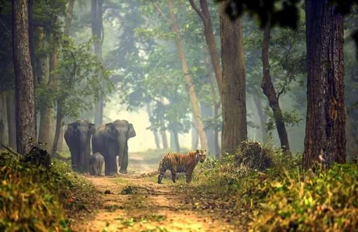 Best Time To Visit Dudhwa National Park