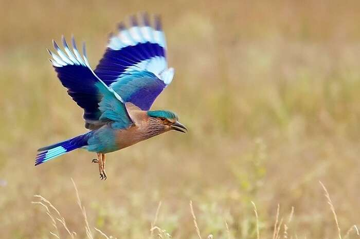 Bird Watching Tours At Dudhwa