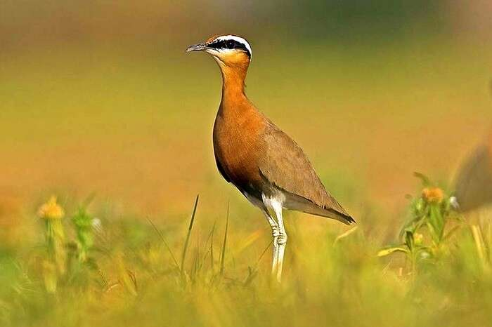 How To Reach Sultanpur Bird Sanctuary-001