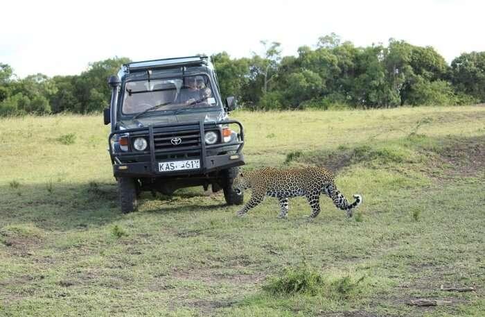 Kenya Safari Savanna Wild Africa Masai Mara