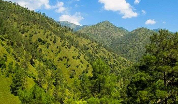 View of Green valley Shimla