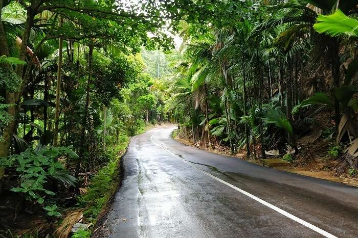 sandeep seychelles trip: the lush greenery of seychelles