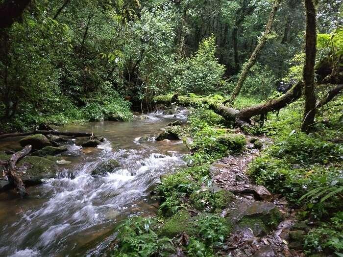 mawphlang forest