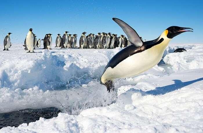 penguins View