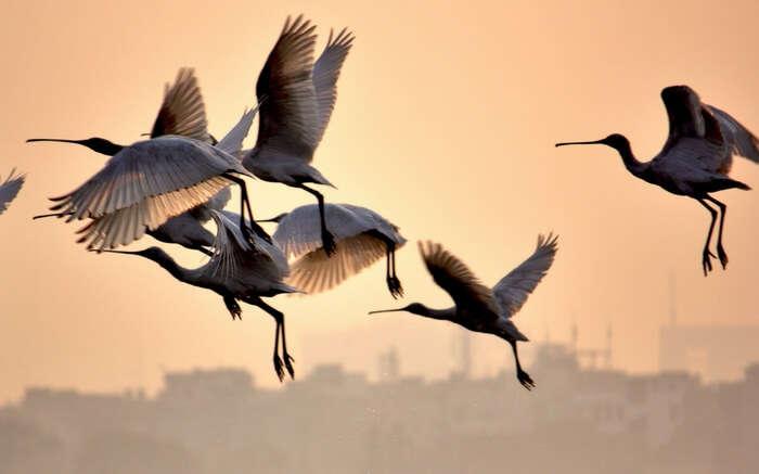 Birds flocking together in Okhla Bird Sanctuary in Delhi