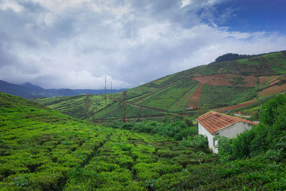 a house amid the tea plantations