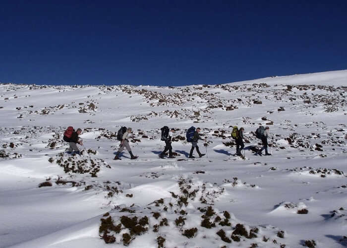 Snowshoe Trek On The Overland Track