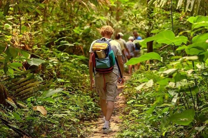 tips for jungle safari: DOs Of Jungle Safari