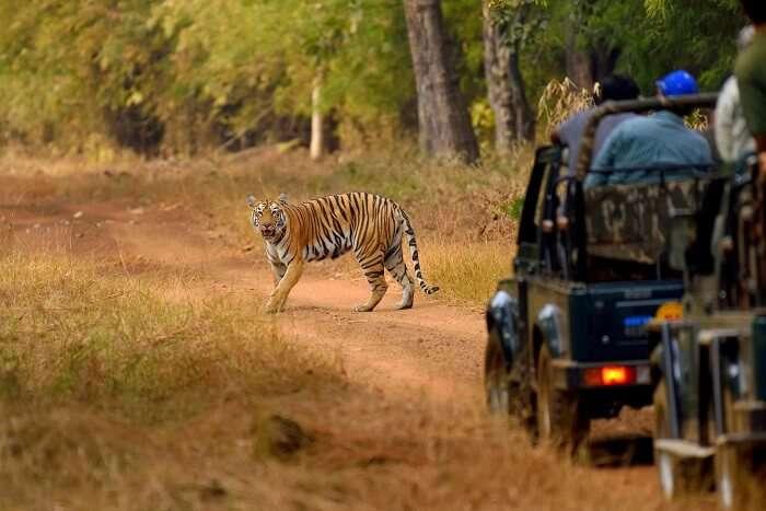 tips for jungle safari: Plan Your Safari In Dry Season