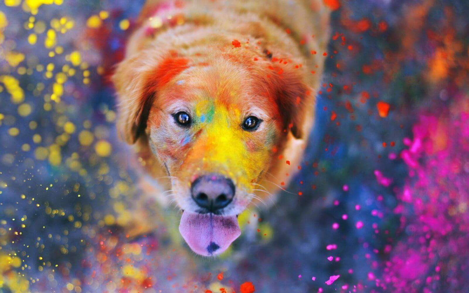 a dog in holi