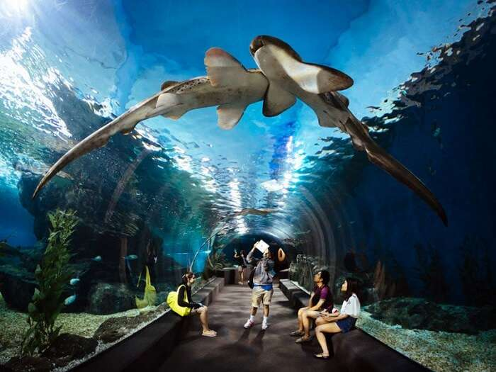 ocean world bangkok