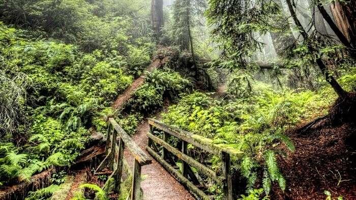 Rainforest In Assam
