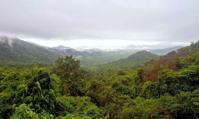 Rainforest In Western Ghats