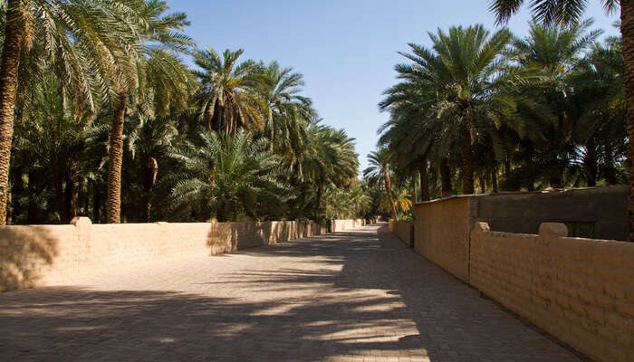 Spend moments of quietude at Al Ain Oasis