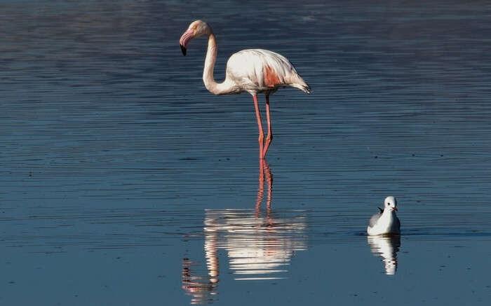 acj-0702-flamingo-sanctuary-mumbai (3)