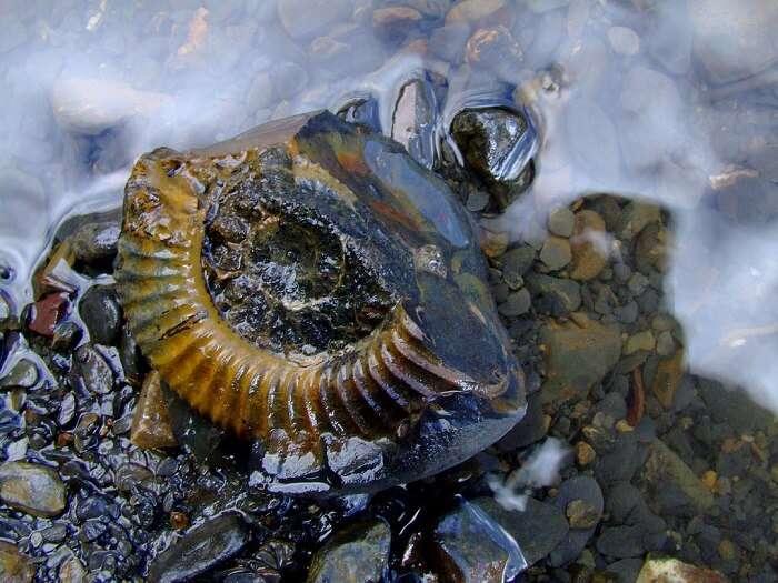 fossils in spiti