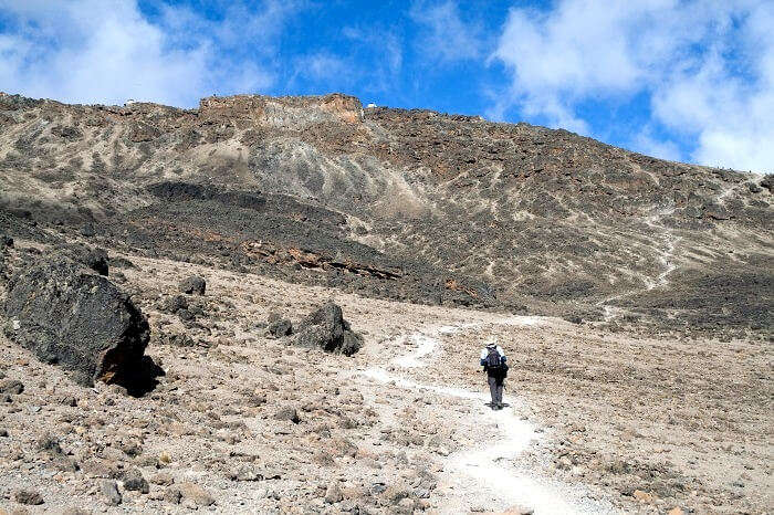 trekker at machame route kilimanjaro