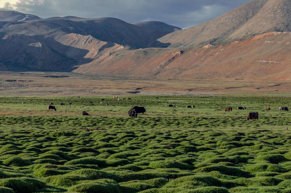 changthang plateau
