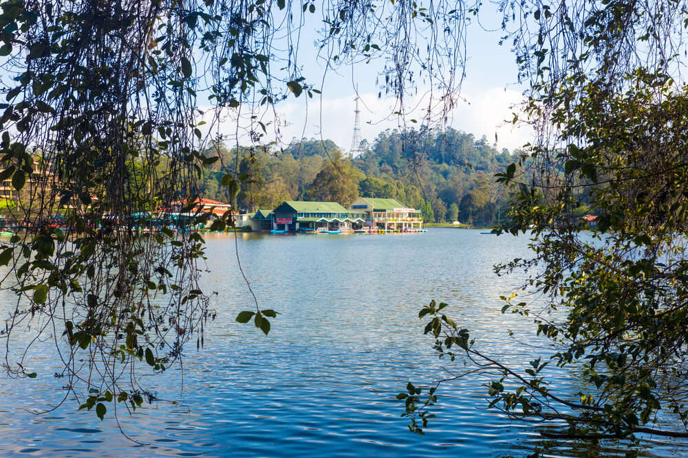 Kodaikanal lake through bushes